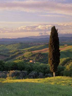 Cypress Tree and Countryside Near Val D'Asso, Tuscany, Italy, Europe by Patrick Dieudonne