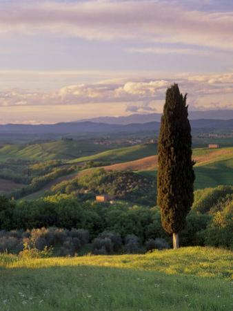 Cypress Tree and Countryside Near Val D'Asso, Tuscany, Italy, Europe