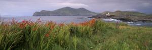 Doulus Bay and Doulus Head, Valentia Island, Ring of Kerry, Munster, Republic of Ireland, Europe by Patrick Dieudonne