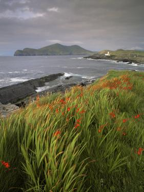 Lighthouse and Doulus Head, Valentia Island, Ring of Kerry, Co. Kerry, Munster, Republic of Ireland by Patrick Dieudonne