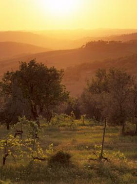 Sunset over Vineyards Near Panzano in Chianti, Chianti, Tuscany, Italy, Europe by Patrick Dieudonne