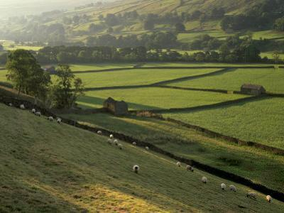 Walled Fields and Barns, Swaledale, Yorkshire Dales National Park, Yorkshire, England, UK