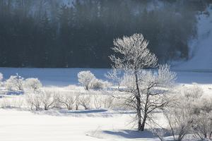 Canada, Nova Scotia, Cape Breton, Cabot Trail, Frosted Trees in Margaree by Patrick J. Wall