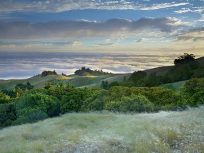 A Strong Breeze and Long Exposure Time Softened the Flowing Grasses and Trees on Mt Tamalpais