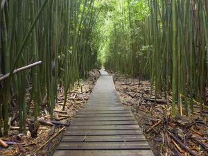 Boardwalk Trail Through a Bamboo Forest on Maui, Hawaii, USA by Patrick Smith