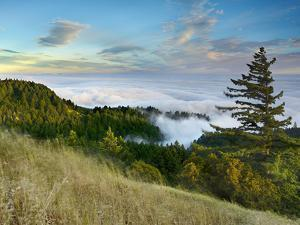 Fog Rolling over the Lower Hills at Mt. Tamalpais On A Late Spring Evening, California, USA by Patrick Smith