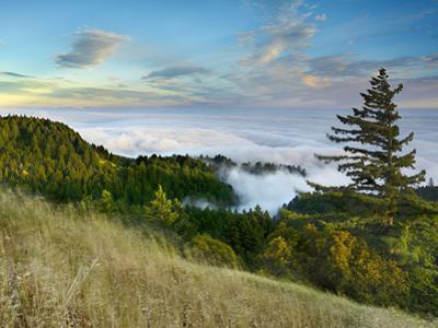 Fog Rolling over the Lower Hills at Mt. Tamalpais On A Late Spring Evening, California, USA