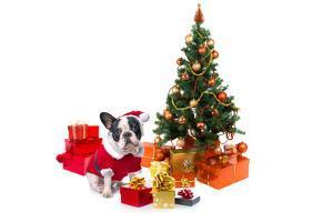 Dog Dressed Up in Santa Costume under Christmas Tree by Patryk Kosmider