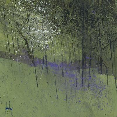 Bluebells by Paul Bailey