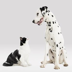 Portrait of Cat and Dog by Paul Bradbury