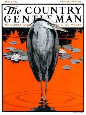 """Crane and Lilly Pads,"" Country Gentleman Cover, May 3, 1924 by Paul Bransom"