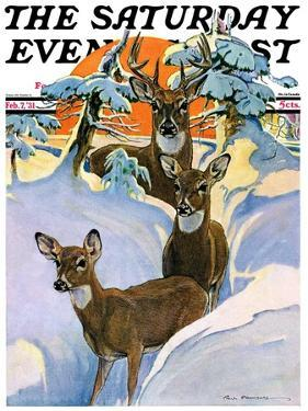 """Deer in Snow,"" Saturday Evening Post Cover, February 7, 1931 by Paul Bransom"