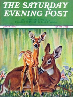 """""""Doe and Fawn in Forest,"""" Saturday Evening Post Cover, June 1, 1940 by Paul Bransom"""