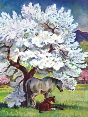 """Horses and Tree Blossoms,""May 1, 1940 by Paul Bransom"