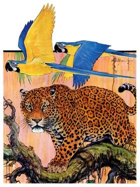 """Leopard and Parrots in Jungle,""September 2, 1933 by Paul Bransom"