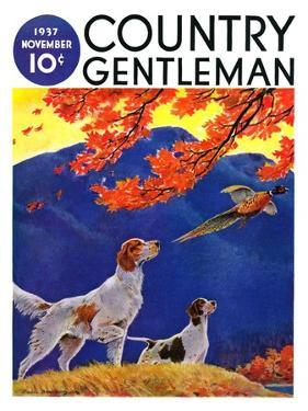 """Pointing to the Pheasant,"" Country Gentleman Cover, November 1, 1937 by Paul Bransom"