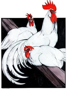 Roosting Rooster & Hens by Paul Bransom