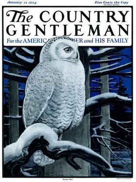 """Snowy Owl in Forest at Night,"" Country Gentleman Cover, January 12, 1924 by Paul Bransom"