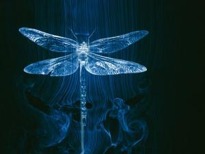 A Model of a Dragonfly in a Wind Tunnel Shows the Pattern of Air Passing over the Insect by Paul Chesley