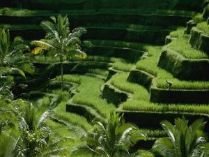 Scenic Valley with Rice Fields in Balis Central Highlands by Paul Chesley