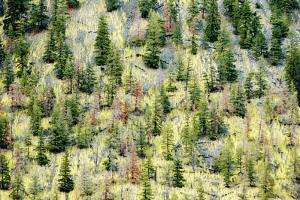 Hillside Re-Growth after a Forest Fire in the Similkameen Valley by Paul Colangelo