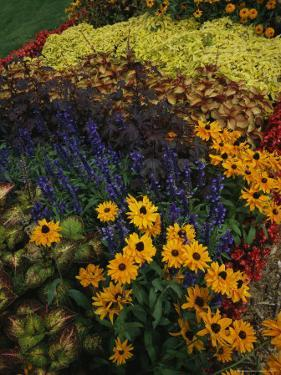 A Flower Bed Grows Near Milwaukees Lakefront by Paul Damien