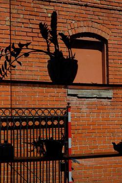 A Plant and Teapot Silhouetted Against an Old Red Brick Building in Westport, Kansas City by Paul Damien
