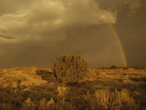 A Rainbow Appears as a Storm Approaches a Sagebrush-Covered Mesa by Paul Damien