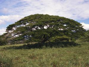 A Tree in a Grassy Field by Paul Damien