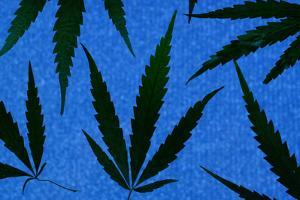 An Assortment of Marijuana Leaves Against a Blue Speckled Background by Paul Damien