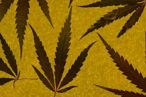 An Assortment of Marijuana Leaves Against a Yellow Speckled Background by Paul Damien