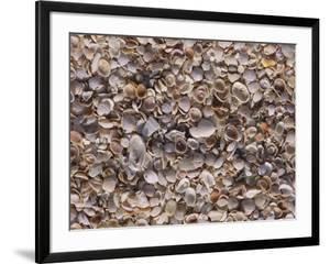 An Assortment of Seashells Litter a Beach by Paul Damien