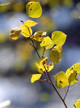 Close View of Leaves on a Branch by Paul Damien