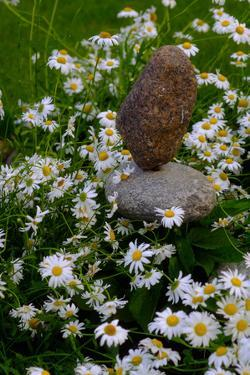 Daisies Blooming around Balancing Rocks in the Backyard of a Home by Paul Damien