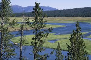 Distant Hills and Pine Forests and the Gentle Bend of the Yellowstone River by Paul Damien