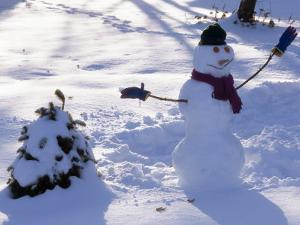 Dressed Up Snowman Next to a Snow Covered Colorado Blue Spruce by Paul Damien