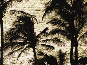 Palm Trees Silhouetted against the Pacific Ocean by Paul Damien