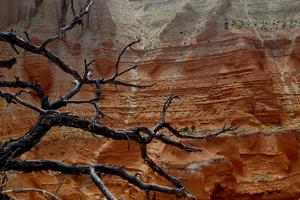 The Branches of Dead Tree Against the Colorful Cliffs in Kodachrome State Park, Utah by Paul Damien