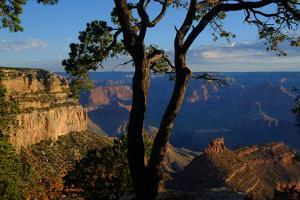 Trees on the Edge of the South Rim of the Grand Canyon by Paul Damien