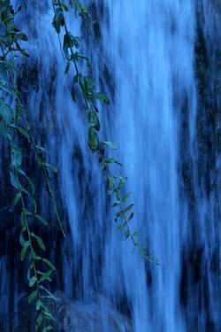 Water Rushes over a Waterfall with Branches of a Weeping Willow Tree in the Foreground by Paul Damien