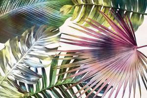 Palm Dreams - Rainbow by Paul Duncan