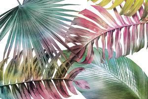 Palm Fantasy - Rainbow by Paul Duncan