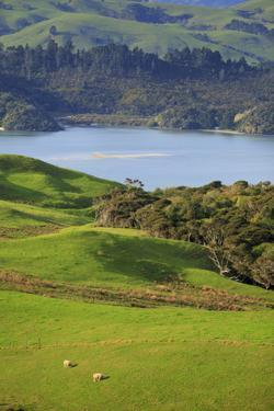 Coromandel Peninsula, North Island, New Zealand by Paul Dymond