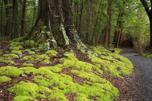 Forest in Fiordland National Park, Te Anau, New Zealand by Paul Dymond