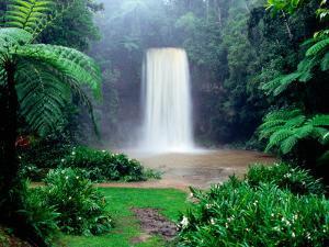 Millaa Millaa Falls by Paul Dymond