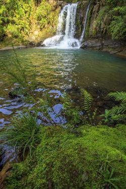 The Waiau Falls on the Coromandel Peninsula of the North Island of New Zealand by Paul Dymond