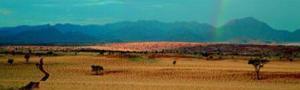 Namib Rand - Namibia by Paul Franklin