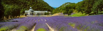 Sault - Provence by Paul Franklin