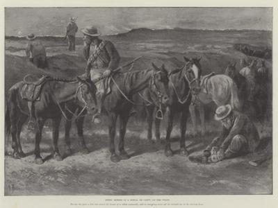 Boers' Horses in a Donga, or Cleft, on the Veldt