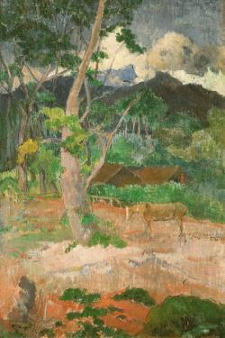 Landscape with a Horse, 1899 by Paul Gauguin
